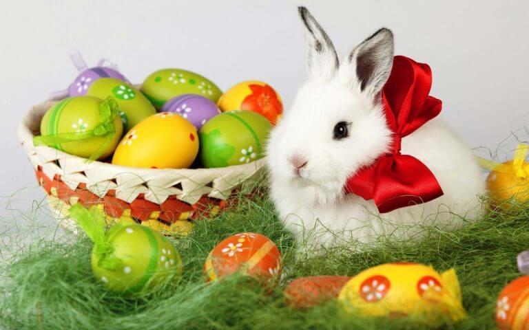 Easter Bunny Bring Egg