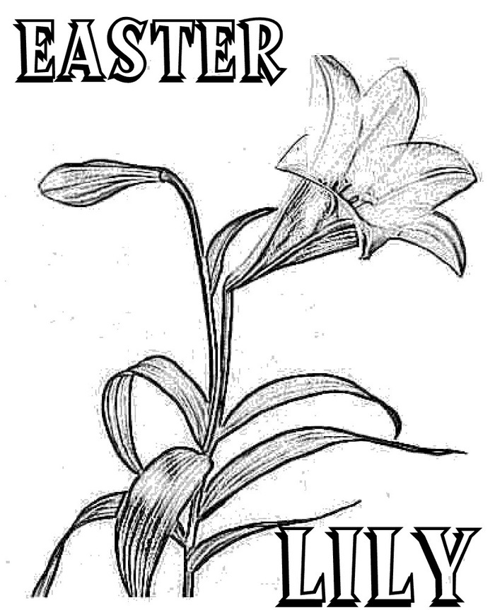 Easter Lily Coloring Pages