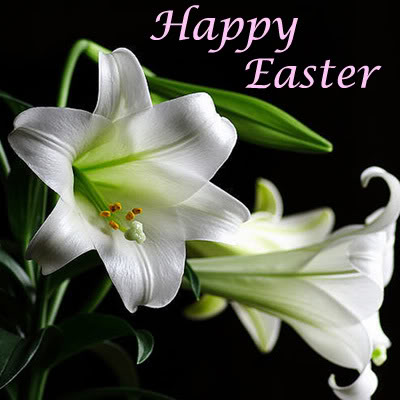 Easter Lily Images